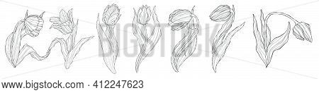 Line Art Tulips Set. Hand Drawn Set Of Tulips Branches Collection. Vector Flowers And Buds Isolated