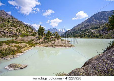 Pinien am Ufer des glazialen Bergsee