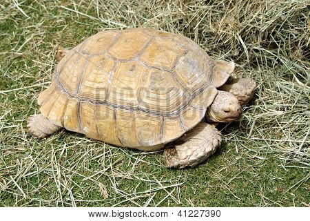A beautiful Tortoise