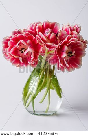 Pink Tulips In A Glass Vase