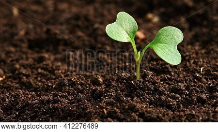Plant Growing In Soil Growth Seedling Natural Plant Agriculture Summer Spring Land Baby Plant Macro
