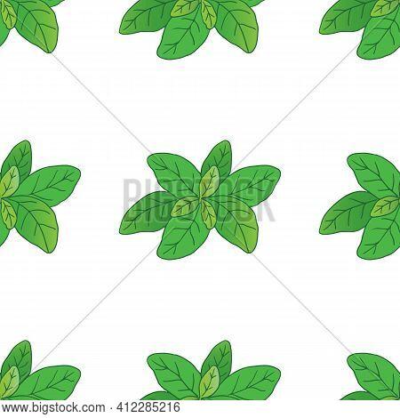 Vector Graphic Illustration Basilic Plant Seamless Pattern-02