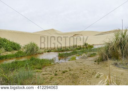 The Te  Sand Dunes On The Northland Peninsula Of New Zealand