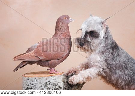 The Dog Of Gray Color, The Breed Of Zvergschnauzer, Rests On The Birch Stump With Its Front Paws, An