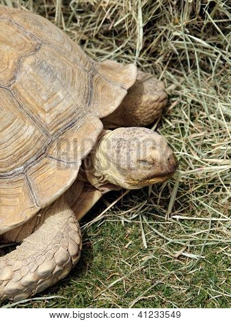 Closeup of a tortoise