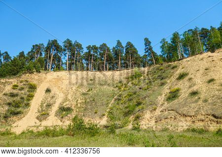 Pine Forest Growing On Edges Of Former Industrial Sand Quarry. All Working Area Has Overgrown By Pla