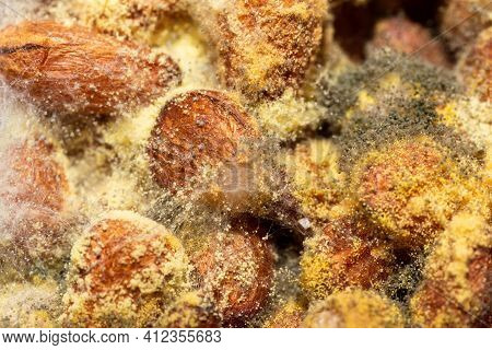 Pine Nuts With Mold Background. Close Up Of Mold Spores, Mycelium, Yellow Balls And Green Flakes. Sp