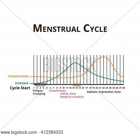 Menstrual Cycle. Menstruation, Ovulation. Hormones Estrogen And Progesterone. Menstrual Cycle Diagra