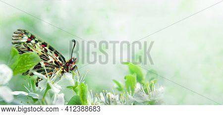 Colorful Butterfly On A Branch Of Blooming Sakura. Pastel Spring Background. Blooming Gardens. South
