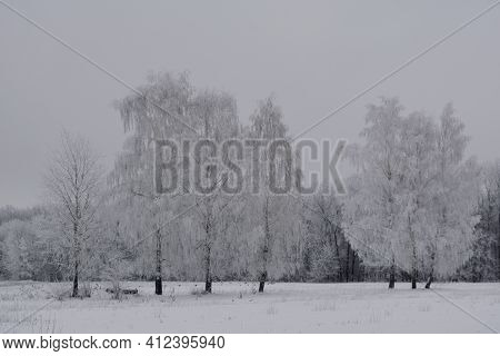 Winter Landscape With Birch Trees In Hoarfrost. Grey Overcast Day.