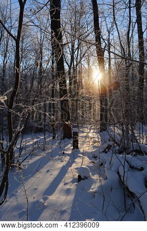 The Sun Shines Through The Winter Forest. Beautiful Landscape With Trees And Shadows In The Snow.