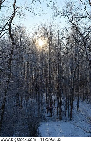 View From The Hill On Winter Forest. Sun Lights Through Trees.