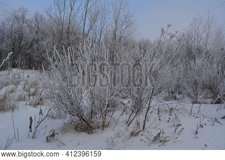 Beautiful Winter Scene With Herbs, Bushes And Trees Covered By Hoarfrost