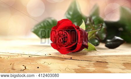 Red Rose On Wooden Background Beautiful Red Flower Natural Bouquet Fragile Petals Green Leaves New P