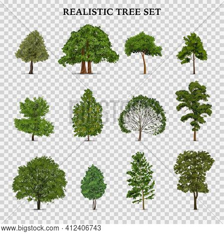 Realistic Tree Transparent Set With Isolated Images Of Single Trees With Foliage Green Leaves And Te