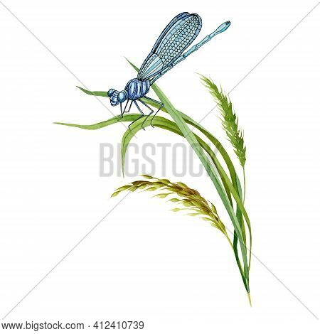 Beautiful Dragonfly Insect And Meadow Herbs. Dragonfly Watercolor Hand Drawn Image. Elegand Wild Ins