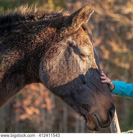 Hand Caressing Horse. Horse In The Field. Care With Love. Switzerland. Friendship.