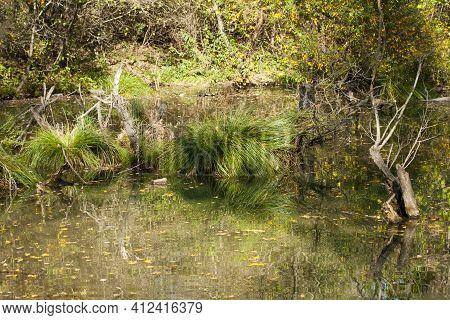 Wetland Landscape. Autumn Wetland Landscape With Mirror Water Surface