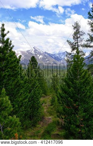 pine trees on background high mountains