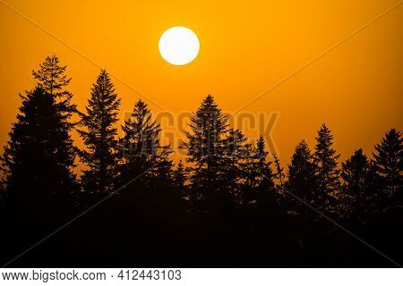 Big Sun During Sunset Above Forest With Romantic Orange Sky