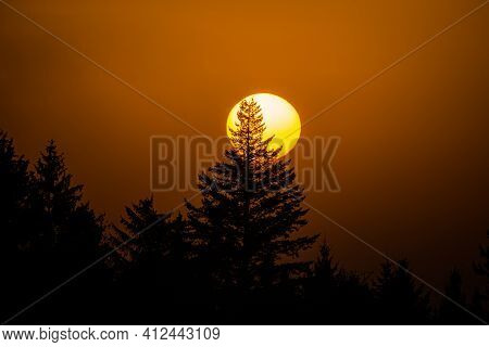 Sun Goes Down Behind The Top Of The Trees During Sunset In Winter - Sun In Detail