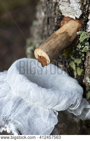 Droplet Of Birch Sap Dripping From A Tap Into A Jar. Wooden Tap With Drop In Tree Trunk. Early Sprin