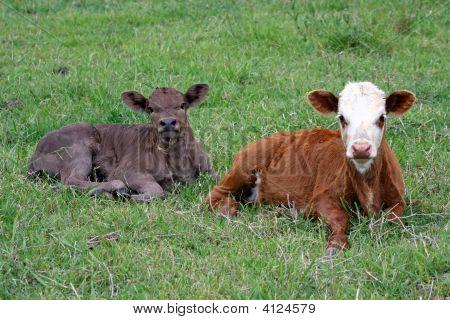 Farmyard Babies