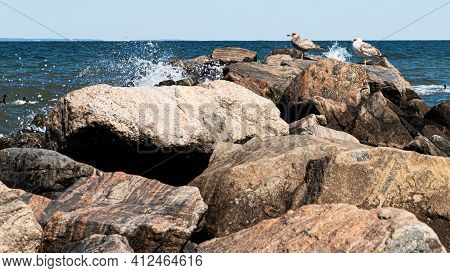 Two Seagulls Standing On Rocks While Water Is Splashing From The Long Island Sound At Sunken Meadow