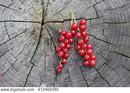 Currant Berry, Red Currant On A Wooden Background. Space For Text With Currant Berries. Healthy Red