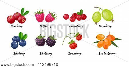Forest Berry And Fruit Plant. Juicy Fresh Berries Cranberry, Raspberry, Gooseberry, Lingonberry, Blu