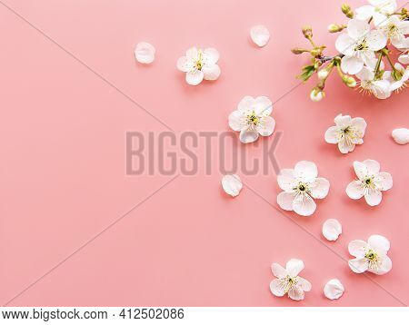 Spring Border Background With Beautiful White Flowering Branches. Pink Background, Bloom Delicate Fl