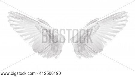 Pinion On The Sprawling White On White Background