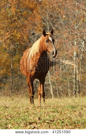 A Horse in the field
