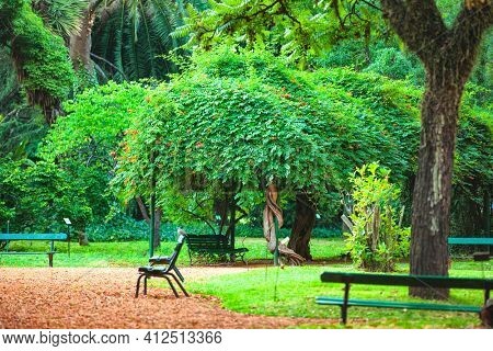 extraordinarily beautiful trees in the Botanical Garden of Buenos Aires