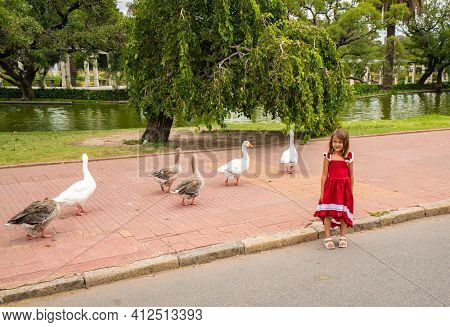 Walking geese in Rosedal park in Buenos Aires Argentina