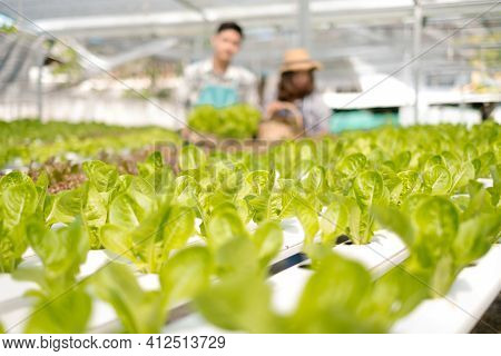 Hydroponics, Smiling Young Asian Couple Farmers Holding Vegetable Baskets, Standing On A Farm, Growi