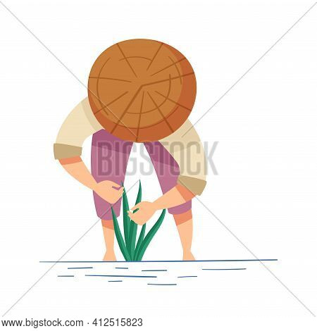 Vietnamese Man Farmer In Straw Conical Hat Setting Rice Crop In Watery Ground Vector Illustration