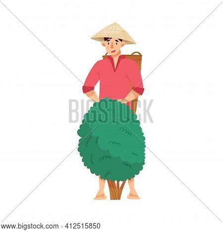 Vietnamese Man Farmer In Straw Conical Hat Picking Tea Leaves In Wicker Basket Vector Illustration
