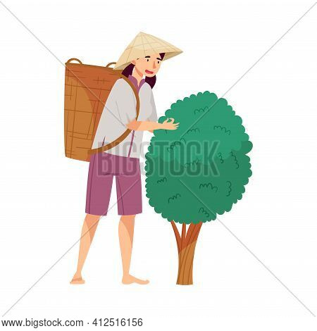 Vietnamese Woman Farmer In Straw Conical Hat Picking Tea Leaves In Wicker Basket Vector Illustration