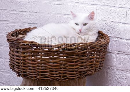 A White Cat Rests In A Wicker Basket Against A White Decorated Wall.