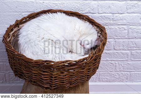 A White Cat, Curled Up, Sleeps In A Wicker Basket Against The Background Of A White Decorated Wall.