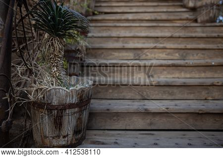 Close Up Of Old Wooden Pots With Plants On Wooden Steps. Atmospheric Vintage Garden Decor.