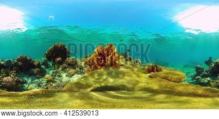 Tropical Coral Reef And Fishes Underwater. Tropical Fishes And Coral Reef Underwater. Travel Vacatio