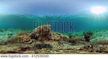 Scene Reef. Marine Life Sea World. Underwater Fish Reef Marine. Philippines. Virtual Reality 360.