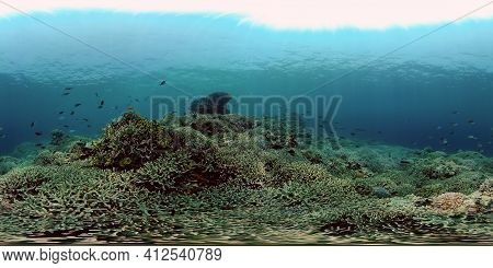 Underwater Fish Garden Reef. Reef Coral Scene. Coral Garden Seascape. Philippines. 360 Panorama Vr