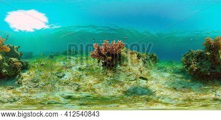 Underwater Fish Garden Reef. Reef Coral Scene. Seascape Under Water. Philippines. Virtual Reality 36