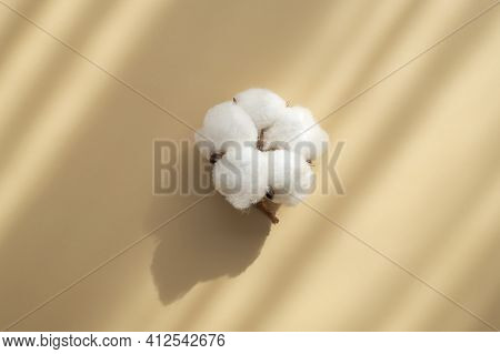 White Cotton Flower With Sun Shadows On Beige Background Flat Lay Top View. Delicate Light Beauty Co