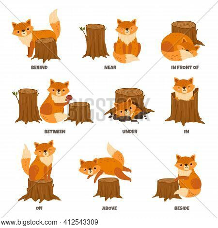 English Prepositions. Cartoon Animal, Learn Place Preposition. Cute Wild Fox Standing Behind Between
