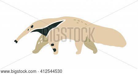 Giant Anteater Or Ant-bear With Long Nose. Walking Brazilian Ant-eater With Dense Fluffy Fur And Elo