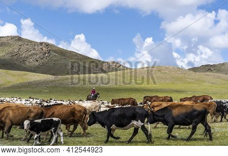 Baruuntunuun, Mongolia - August 8, 2019: Colorful Steppe And Desert With Herd Of Goats With Shepherd